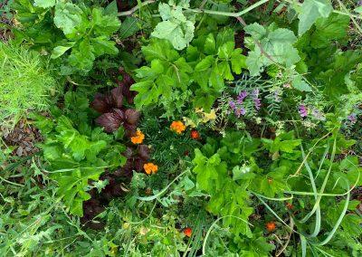 hort viu permacultura jardi anima