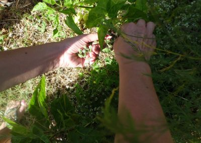 la remeiera collint jardi anima